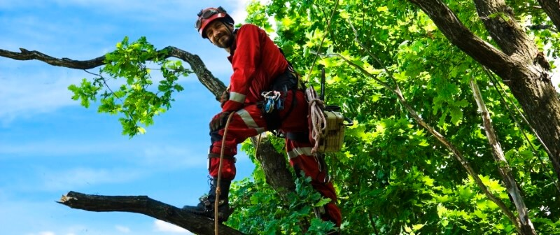 tree services Brea California